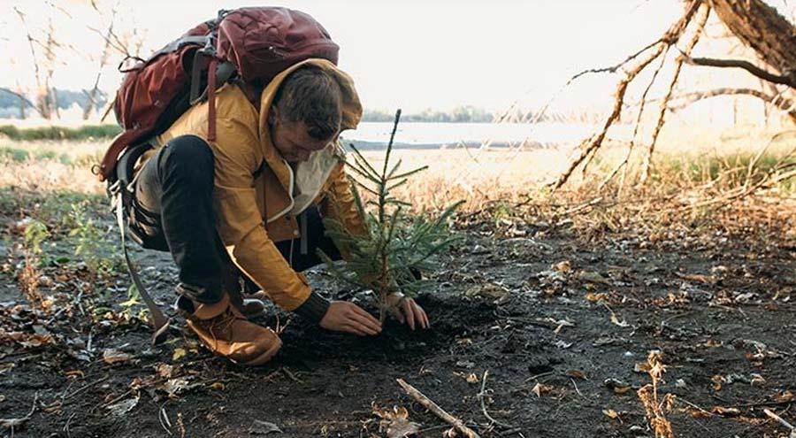 همکاری زیپو برای نجات جنگلها